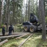 Skogsdag i Njushammar
